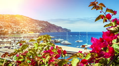 View of Funchal port through the blooming flowers. Madeira island - stock footage