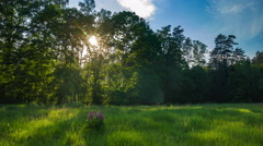 4k timelapse of beautiful meadow near forest at warm summer afternoon. Stock Footage