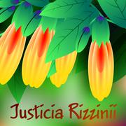 Beautiful spring flowers Justicia rizzinii. Cards or your design with space f - stock illustration