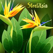 Beautiful spring flowers Strelitzia Reginae. Cards or your design with space  Stock Illustration