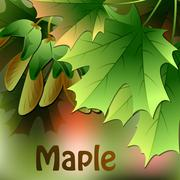 Maple leaves on abstract blurred background. Vector Stock Illustration