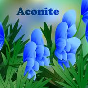 Beautiful spring flowers Aconite. Cards or your design with space for text. V - stock illustration