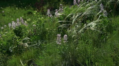 Wild herbs moving with the wind Stock Footage