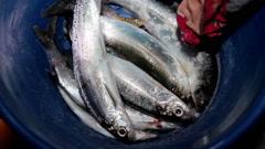 Winter fishing. Catch. Krasnoyarsk Krai. Russia. Stock Footage