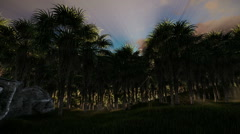 Oil Palm Tree Plantation against beautiful sunset, fly through Stock Footage
