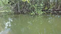 Wild Australian landscape of gum trees Stock Footage