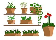 Set of houseplant. How to plant a houseplant - stock illustration