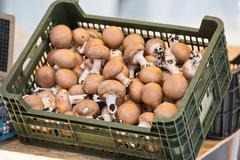 Mushrooms in a plastic box on a farm market - stock photo