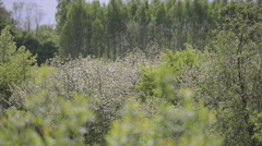Blossoming Apple Orchard on a Sunny Day Stock Footage