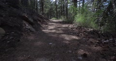 A stroll in the woods Stock Footage
