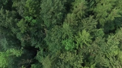 Aerial view - fly over the North European Forest Stock Footage