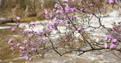 Flowers Above Rough River Seamless Loop Footage - stock footage