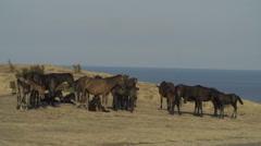Wild horses graze on a hill near the sea Stock Footage