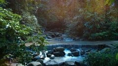 Jungle Stream Crosses a Road at a Jungle Nature Park, with Sound. Stock Footage