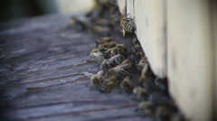 Swarm of bees near a beehive Stock Footage