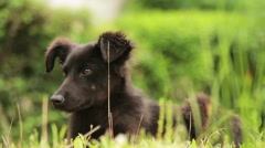 Homeless Dog Sitting in the Grass - stock footage