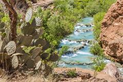 Cactus Above Havasu Creek - stock photo