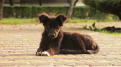 Homeless Dog Sitting in the Street - stock footage