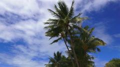 Ellis beach in Cairns Queensland Australia Stock Footage