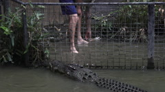 Trainer and Saltwater Crocodile during an Attack Show Stock Footage