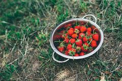 Bowl with freshly picked homegrown organic strawberries Stock Photos