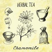 Chamomile herbal tea. Set of vector elements on the basis hand pencil drawing - stock illustration