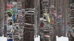 Holy places to worship the spirits. The trees tied colored ribbons round. Russia - stock footage