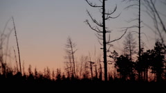 Sunset in the snowy forest. Krasnoyarsk region. Siberia. Russian Federation. Stock Footage