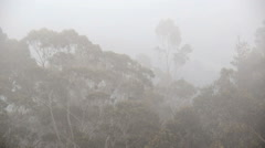 Thick fog drifting through dense forest jungle Asturias Northern Spain - stock footage