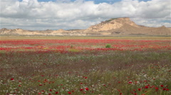Bardenas Reales badlands red flowers plain mountains high contrast light shadows Stock Footage