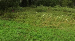 Low dynamic fly over the forest meadow Stock Footage