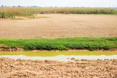 green grass on cracked soil in the bottom of a river showing drought - stock photo