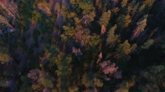 Birds Eye Over Forrest Stock Footage
