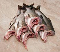 Headless carcass silver carp - stock photo