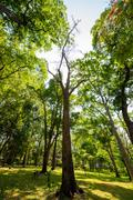 Forest trees. nature green wood sunlight backgrounds. Stock Photos