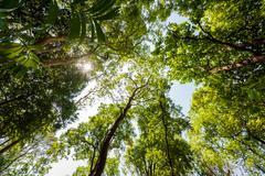 Sun rays shining through trees ,nature background - stock photo