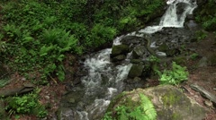 Cascade of small waterfalls on green valley bottom, forested area Stock Footage