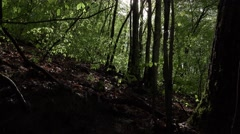 Sun shine through leafy forest on hill slope, slide shot - stock footage