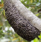 Honey Bee Hive - stock photo