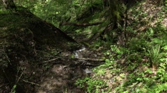 Small creek run through woodland valley, moist and shaded area Stock Footage