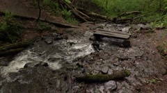 Windbreak trees in water, quick stream run across hiking path Stock Footage