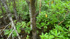 Wild landscape of Australian mangroves in Daintree National Park - stock footage