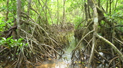 Wild landscape of Australian mangroves in Daintree National Park Stock Footage