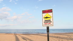 Shark Sighting At Beach - stock footage