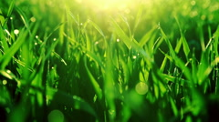 Bright vibrant green grass close-up. RAW video record Stock Footage