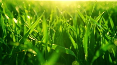 Water drops on the green grass. Shallow Dof. RAW video record Stock Footage