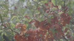 Detail shot of lush spring garden foliage in a gently blowing morning breeze - stock footage