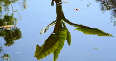 Tree Reflexion Into The Water Stock Footage