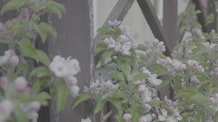 Detail shot of lush spring garden foliage in a gently blowing morning breeze Stock Footage