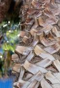 closeup of palm tree with detailed structure - stock photo